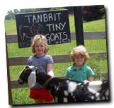 Tanbrit Tiny Goats Home